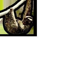 Sloth Week!