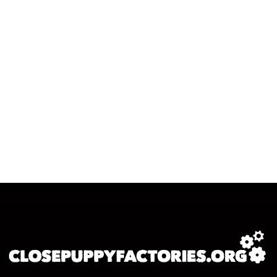 Close Puppy Factories