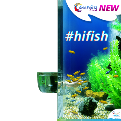 #hifish