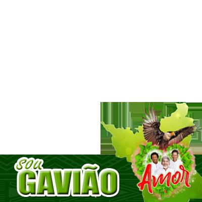 SOU GAVIÃO